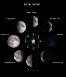 Инфографика «Фазы Луны»